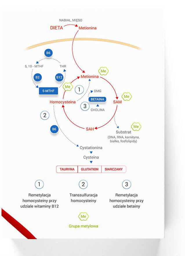 Homocysteina schemat/homocysteina-schemat