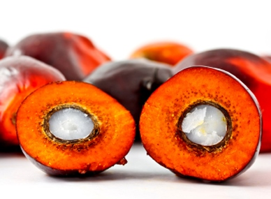 Owoc palmy olejowej